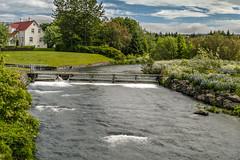 Elliðaá (Baldur Eðvarðsson) Tags: reykjavik iceland travel water river trees