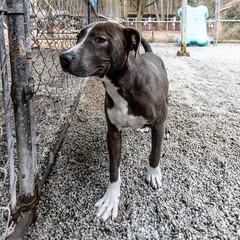 Edward18Jan201943.jpg (fredstrobel) Tags: dogs pawsatanta atlanta usa animals ga pets places pawsdogs decatur georgia unitedstates us
