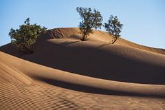 Morning light (Markus Jansson) Tags: sahara desert morocco landscape nature sanddunes dunes trees morning hike hiking
