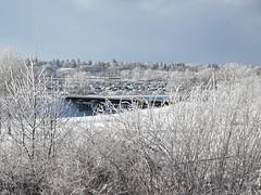 Frosty days (Sean Maynard) Tags: snow frosty frost trees winter calgary daytime alberta canada industrialpark huaweip20pro