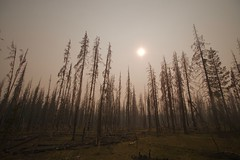 Charred Trees (SkylerBrown) Tags: burnt deadtree forest forestfire landscape nature smoke sun travel trees