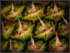 Skin of Evil.......... (Jason 87030) Tags: skin eveil spike spiked pineapple fruit food macro pointed green brown yellow closeup image shot sony ilce alpha a6000 lens tag color colour eat flickt startrek scales armour case shell prick prickle prickly rough