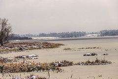 winter (raymond_zoller) Tags: baum landscape schnee wald arbre drzewo eau hiver landschaft tree wasser water winter woda wood árbol вода дерево лес пейзаж снег ხე