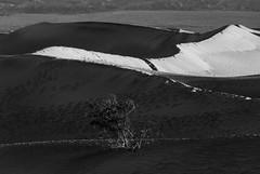 20140120_monochrome_007 (petamini_pix) Tags: california blackandwhite blackwhite bw monochrome grayscale desert landscape deathvalley nationalpark mesquitedunes dune sanddune sand dry highcontrast
