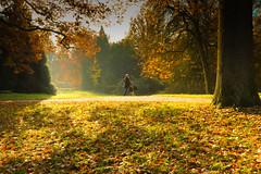 On a cold November morning. (weggum) Tags: zwolle netherlands engelsewerk antonet autumn herfst weggum willem mugge sunlight