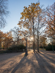 PB174432 (Photodendron) Tags: em1mk2 tiergarten herbst