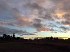 Sunrise in Washington County Oregon near Hillsboro. (born1945) Tags: washington county oregon hillsboro american bald eagle sunrise sky