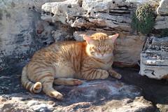 DSC02008 Rubio, Mallorca (Fernando Sa Rapita) Tags: rubio mallorca sarapita cat gato mascota pet freedom libertad sony sonyrx100 sonydscrx100