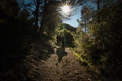 El Rey Sol nos guía... (fffrancis) Tags: nikon d810 sigma2435mmf20 art paseo paisaje descensocastillo sol contraluz vallalmonacid diciembre 2018 fffrancis