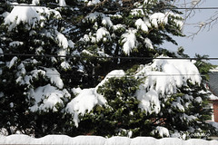 Snow in Washington, D.C. (Stephenie DeKouadio) Tags: canon photography outdoor trees snow winter washington washingtondc dc dcphotos
