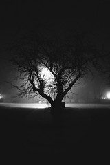 Tree (matthileo) Tags: tree trees branch branches light lights lighting dark morning early fog foggy black white bw blackandwhite blackwhite road street