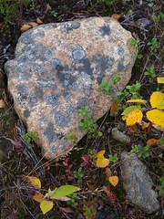 Lapland_Day2_Muonio_20180911_IMGS4762_s (Andrew-Holloway) Tags: lapland muonio autumn torassieppi
