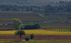 Vignes d'automne en Languedoc (Michel Seguret Thanks for 13.4 M views !!!) Tags: france herault languedoc occitanie michelseguret nikon d800 pro automne autumn fall herbst