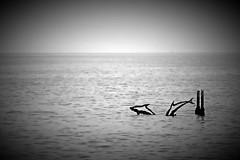 Fe42 (nograz) Tags: michelepiva scultura delfino grado nograz nikond750 blackandwhite biancoenero bw fvg vignetting vignettatura mare sea dolphin