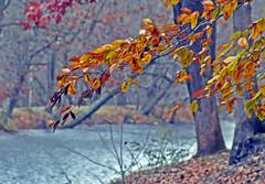 LEAVES 2 (KayLov) Tags: swannanoa scenery asheville grove park inn leaves foliage