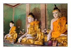 the Buddhas and the crow (Armin Fuchs) Tags: arminfuchs yangon myanmar shwedagonpagoda rangoon burma buddha crow gold buddhism