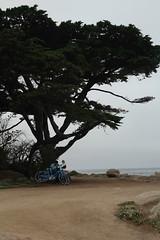 IMG_10939 (mudsharkalex) Tags: california pacificgrove pacificgroveca loverspointpark