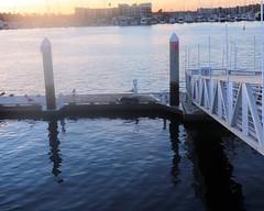 014 What Is On The Dock (saschmitz_earthlink_net) Tags: 2018 california marinadelrey boat parade marinadelreyboatparade christmasparty suez