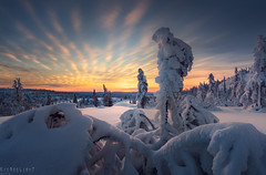 Norge - Winter wanderer (Ron Jansen - EyeSeeLight Photography) Tags: winter snow cold morning sunrise tree trees norway buskerud blue orange soft warm glow crystals