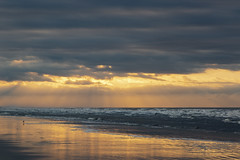 Grand Scheme (matthewkaz) Tags: sunrise sky clouds kiawah kiawahisland ocean atlanticocean water reflection reflections sunrays rays sunbeams gull bird seagull laughinggull beach sand coast coastline shore shoreline waves sc southcarolina 2017 raysoflight