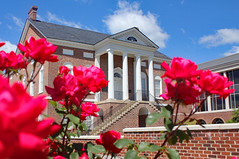 Roses at the Court House 1 (Joseph C. Hinson Photography) Tags: lancaster southcarolina courthouse lancastersouthcarolina robertmills rchitecture design building structure urban architectural exterior america american vintage oldbuilding justice law government legal columns column landmark historic redrosecity rose roses mainstreet stem thorn flower houseoflancaster bluesky brickhouse