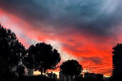 Embers (Melissa Maples) Tags: antalya turkey türkiye asia 土耳其 apple iphone iphonex cameraphone winter evening dusk sundown sunset clouds meltem orange red silhouette trees