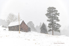 Squall (foto guy Terry) Tags: barn storm landscape wind trees colorado blizzard nature weather adventure winter