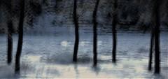 cold feet (RhinoSkin) Tags: three bowriver glenbow frost