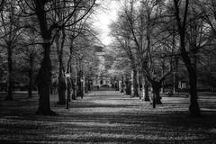 Humlegård (anderswetterstam) Tags: fall nature park parks seasons autumn trees shadow blackandwhite monochrome