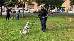 IMG_8584 (Doggy Puppins) Tags: educación canina adiestramiento canino perro dog
