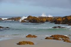 DSC_0580_2 (afagen) Tags: california pacificgrove asilomarstatebeach montereypeninsula asilomar beach pacificocean ocean