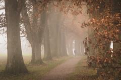 misty November day (hjuengst) Tags: november autumn fall fallcolors herbst herbstfarben allee alley egglburgersee ebersberg mist misty nebel neblig fog foggy bavaria bayern bäume tree leaves blätter laub egglsee absolutegoldenmasterpiece
