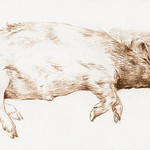 Lying pig by Jean Bernard (1775-1883). Original from The Rijksmuseum. Digitally enhanced by rawpixel. thumbnail