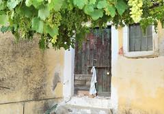 The house under the vine (phileveratt) Tags: windowwednesdays windowwednesday window door canon grapevine eos77d efs18135 hww happywindowwednesday