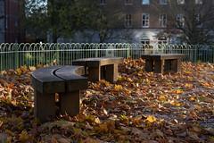 Park benches in autumn sun (Richard Tony) Tags: forburygarden reading berkshire nikond750