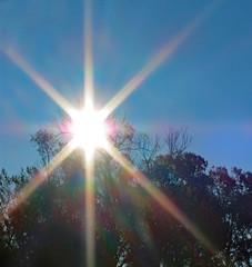 Morning Sunshine. (dccradio) Tags: lumberton nc northcarolina robesoncounty outdoor outdoors outside nature natural tree trees branch branches treebranch treebranches treelimb treelimbs friday fridaymorning morning goodmorning autumn fall november sky bluesky morningsky sunburst burstofsunshine sun sunny sunlight starburst canon powershot elph 520hs