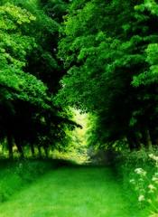 20110429 The path to summer ([Ananabanana]) Tags: nikon d40 nikkor nikon50mm118ais nikkor50mm118ais nikkor50mmf18 nikon50mmf18 50mm niftyfifty manualfocus prime primelens gimp photoscape nikonistas nikonista hatfieldhouse hertfordshire hatfield herts garden gardens park woods lawn grass trees path pathway peaceful warm orton