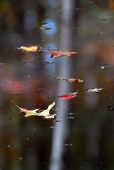 painted pond (courtney065) Tags: nikond200 nature landscapes autumn fall pond pondscape autumncolors colorful reflections waterreflections pondreflections yellow gold red bokeh blurred textures trees foliage fallfoliage flora