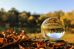 Autumn Ball (richárdjánosi) Tags: lensball autumn leaves color orange season canon canon600d europe amateur nature hungary creative rollei water bokeh wood tree 1855 janricsiartphoto