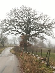 Wet and foggy morning ride (Göran Nyholm) Tags: