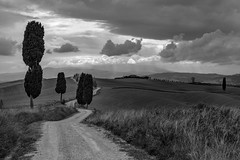 *Val d'Orcia @ the illusion of always nice weather...* (Albert Wirtz @ Landscape and Nature Photography) Tags: albertwirtz tuscany toscana toskana italien italy italia paesaggi campagne campagna campo paysage paisaje landscape valdorcia gladiator terrapille podereterrapille zypressen cipressi blackwhite sw schwarzweiss graustufen nikon d810 natur natura nature fineart pienza monteamiata mountain berg wandern hiking myhomeismycastle monoton bw grauverlauffilter haidagnd09softfilter weg way unpavedroad roughroad hikingtrail wanderweg wolken clouds rain rainyday albertwirtzlandschaftsundnaturfotografie albertwirtzphotography albertwirtzlandscapeandnaturephotography absoluteblackandwhite