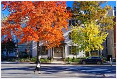 Autumn in DC (Rex Block) Tags: autumnindc nikon d750 dslr washington dc sky fall autumn clear orange street corner intersection pedestrian foliage newhampshireavenue nhave lady woman crosswalk