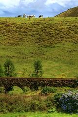 AZORES (toyaguerrero) Tags: azores açores nature naturaleza pasiaje green landscapeportugal saomiguel sanmiguel islaisle atlanticocean sea atlántico muro carvao murodocarvao murodasnovejanelas toyaguerrero maríavictoriaguerrerocatalán