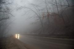 Mystic Forest Road (elinay76) Tags: forest mist fog mystical wood tree car road bulgaria