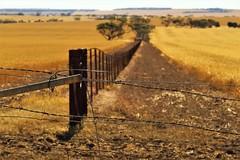 Close the Gate! Yorke Peninsula Farmland, South Australia (Red Nomad OZ) Tags: australia southaustralia portclinton yorkepeninsula farm agriculture field rural country countryside
