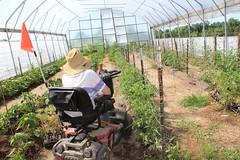 kim agrability IMG_0231 (geistli) Tags: high tunnel vegetable produce wheel chair agrability small farmer beginning