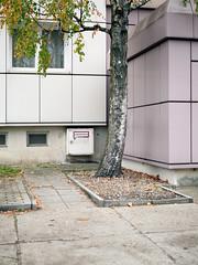 Die Birke. / 12.11.2018 (ben.kaden) Tags: berlin karlshorst sokratesweg birke baum stadtnatur architekturderddr architektur ecke plattenbau 2018 12112018