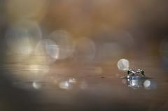 Waterworld (donlope1) Tags: macro nature light grenouille frog autumn bokeh sun wild wildlife