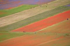 People in Castelluccio di Norcia (Flavia 2.0) Tags: umbria campo prato prati campi fioritura castellucciodinorcia montisibillini