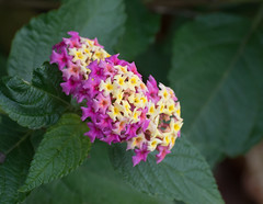 Low-key Colors. (Omygodtom) Tags: nature natural colours colorful flickr flower macro bokeh season art usgs outside urbunnature